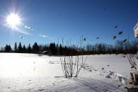 Χειμερινοί Μελισσοκομικοί Χειρισμοί