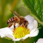 Οι μελισσοκόμοι Αιτωλοακαρνανίας με νέο ΔΣ