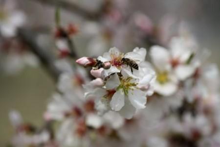 Ανοιξιάτικοι Μελισσοκομικοί Χειρισμοί