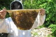 Σεμινάριο για Μελισσοκόμους στη Δράμα