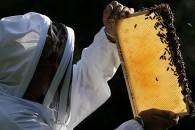 Ταχύρυθμα σεμινάρια για μελισσοκόμους στη Δράμα