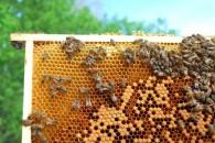 4,26 εκατ. ευρώ για στήριξη της Μελισσοκομίας το 2014