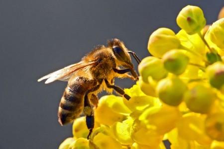 3η Ανακοίνωση Γ' Μελισσοκομικού Συνεδρίου