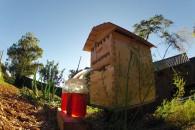 Αυτόματες κυψέλες για μέλι